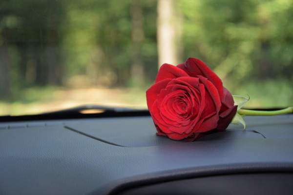 red-rose-on-car-dashboard-3638470_1920