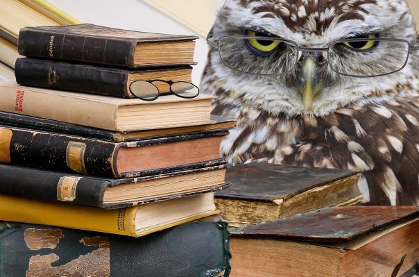 owl-2670138_1920